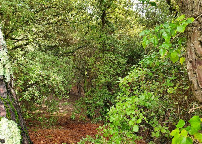 forêt de la pierre attelée
