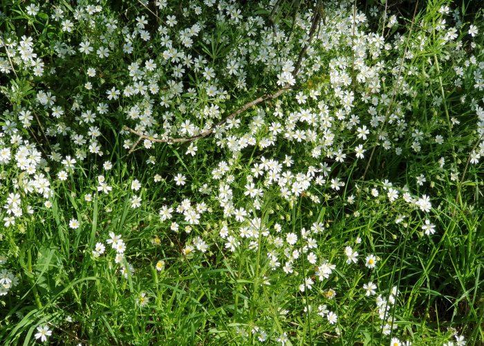 photo fleur lucie